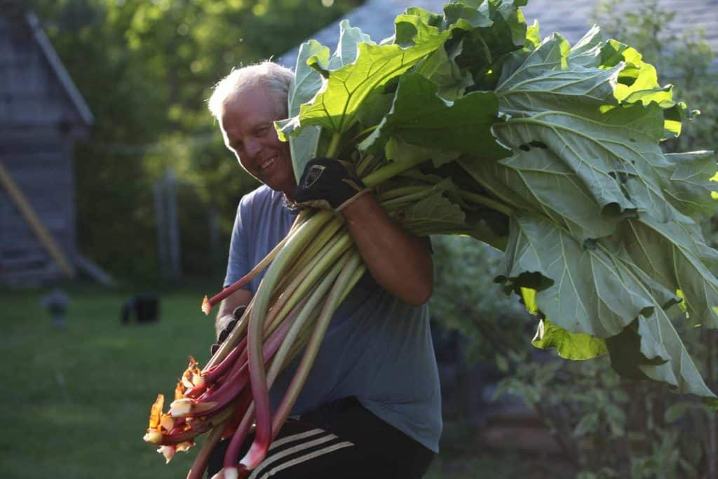 a man carrying rhubarb over his shoulder