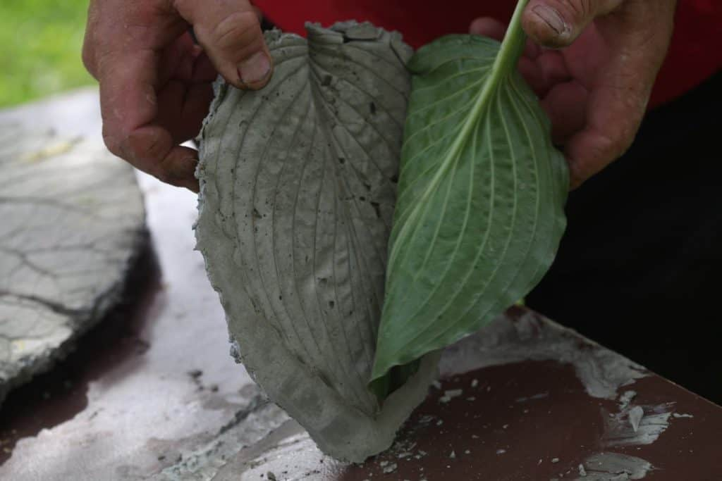 concrete stepping stone leaf mold being removed from the concrete