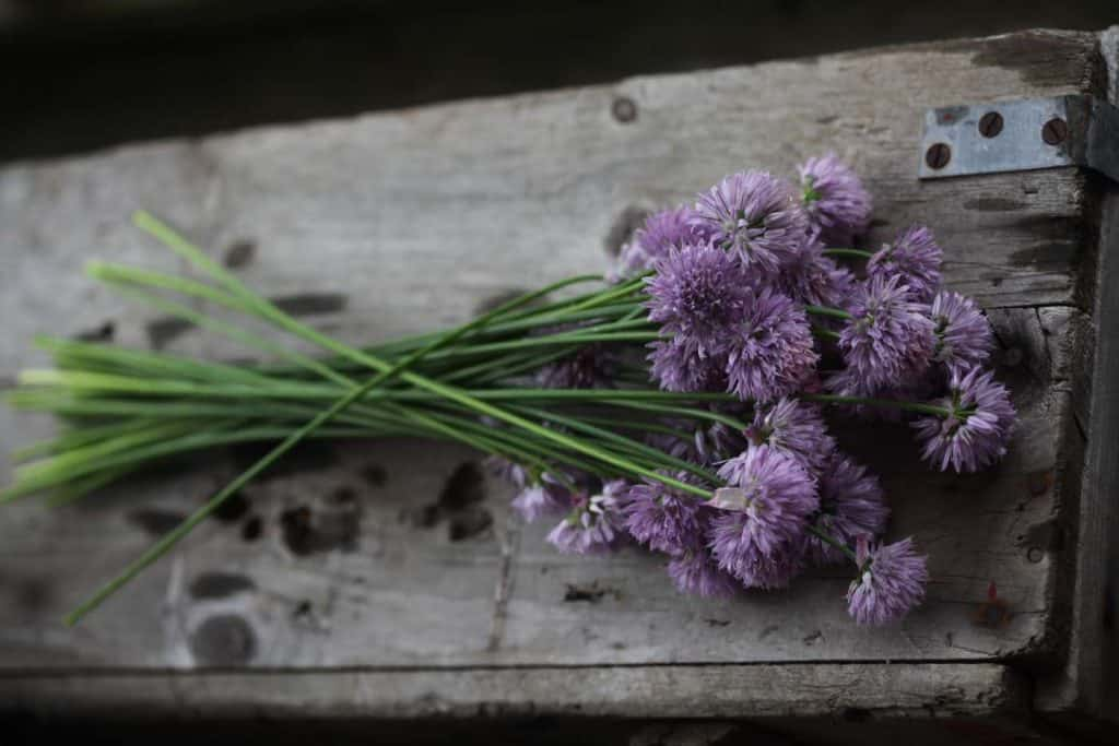 freshly harvested chives placed on a grey wooden box, showing how to use fresh chives from the garden