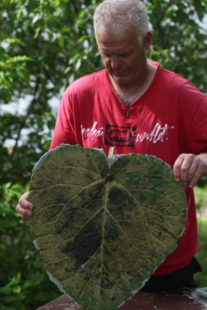 a man holding a leaf with a concrete stepping stone behind the leaf
