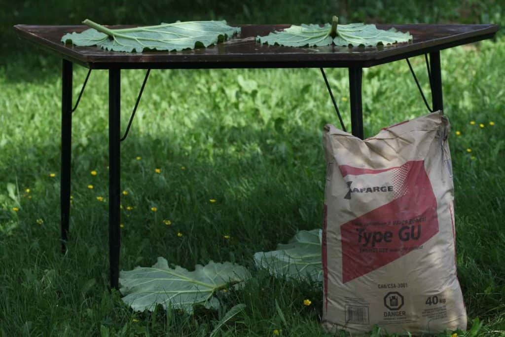 a table in the garden with rhubarb leaves on it and a bag of concrete beside it
