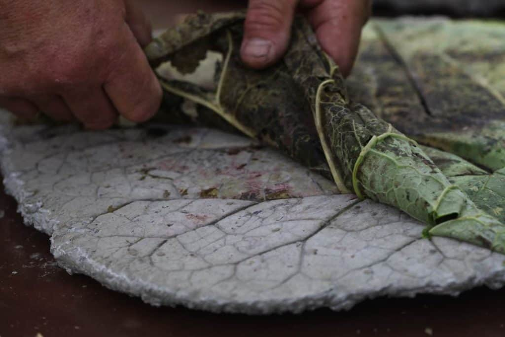 peeling a leaf from concrete