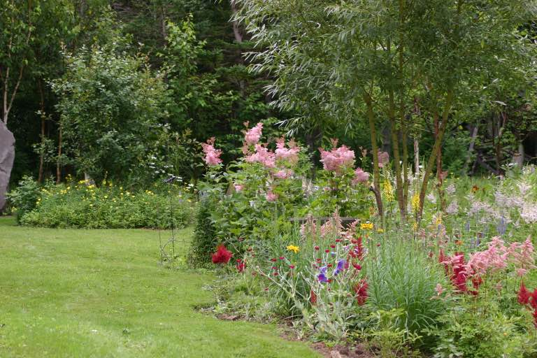 flower garden with many different coloured flowers