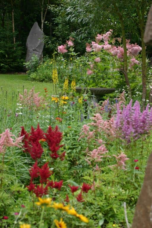 Queen of the prairie growing in the garden with companion plants