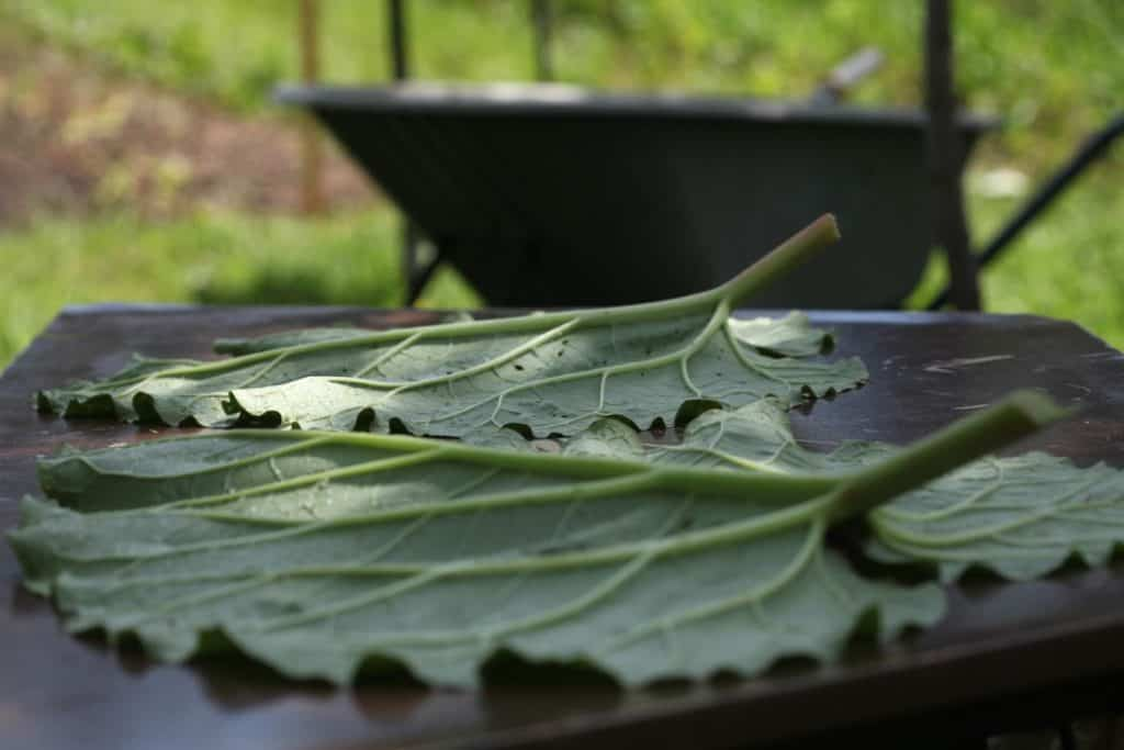 large green leaves on a table with a wheelbarrow in the background