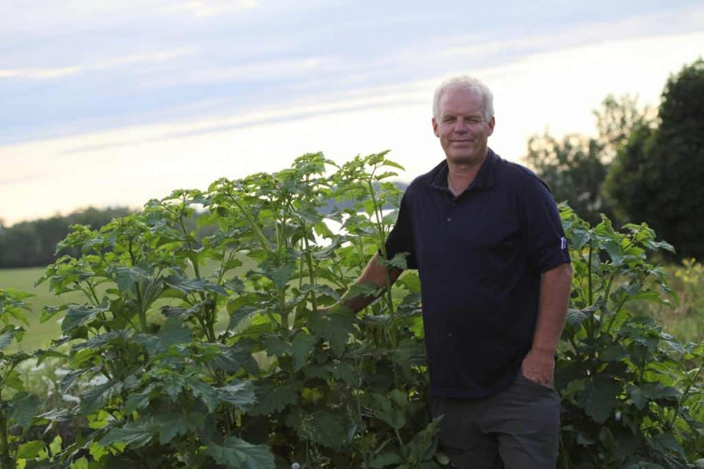 a man standing beside Apple Of Peru growing in the dahlia patch