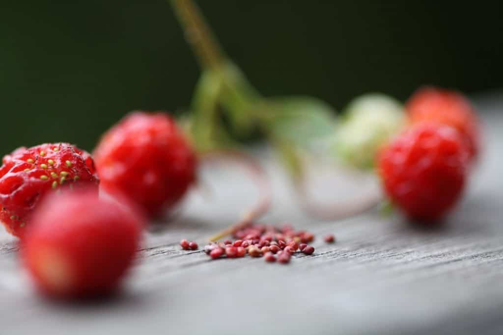 closeup of wild strawberry seeds and wild strawberries