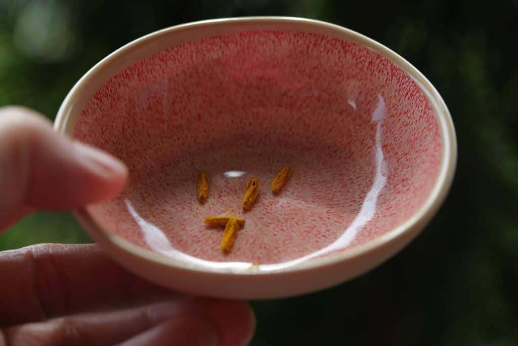 a hand holding a pink bowl containing daylily anthers with ripe pollen