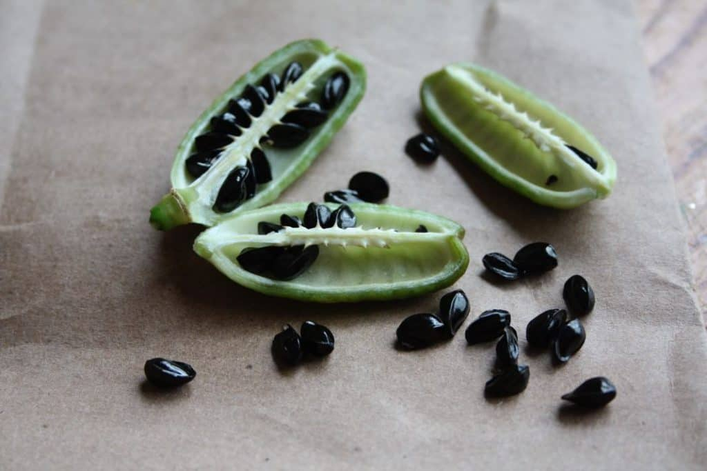black daylily seeds in a green pod