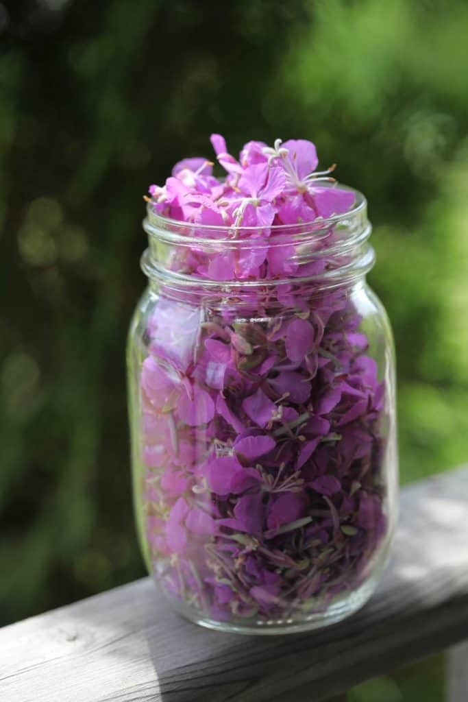 mason jar of fireweed blossoms on a wooden railing