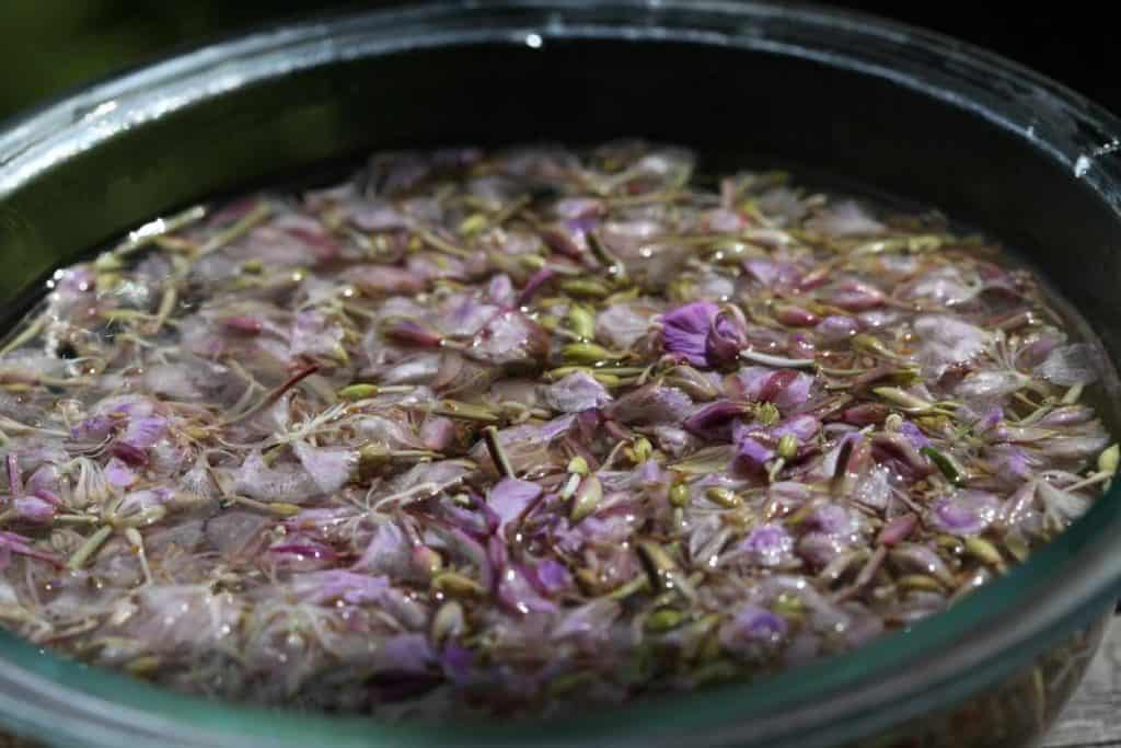 a bowl with fireweed blossoms in boiling water, showing how to make fireweed jelly