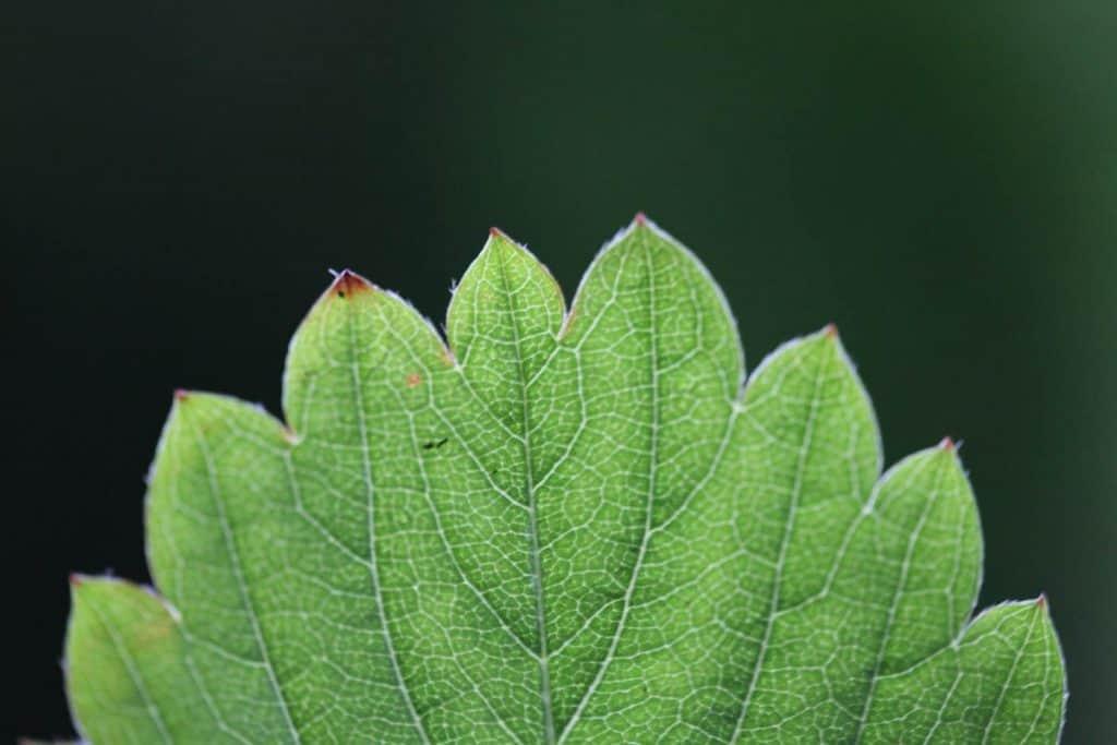 a green leaf against a green blurred background