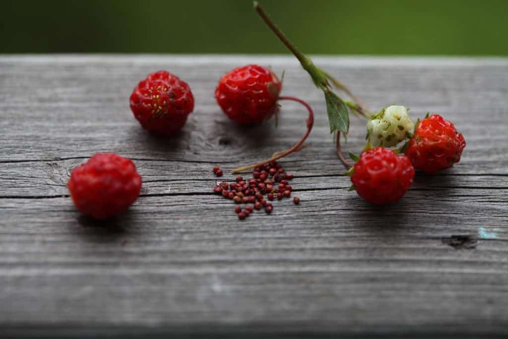 wild strawberries and seeds on a grey wooden railing