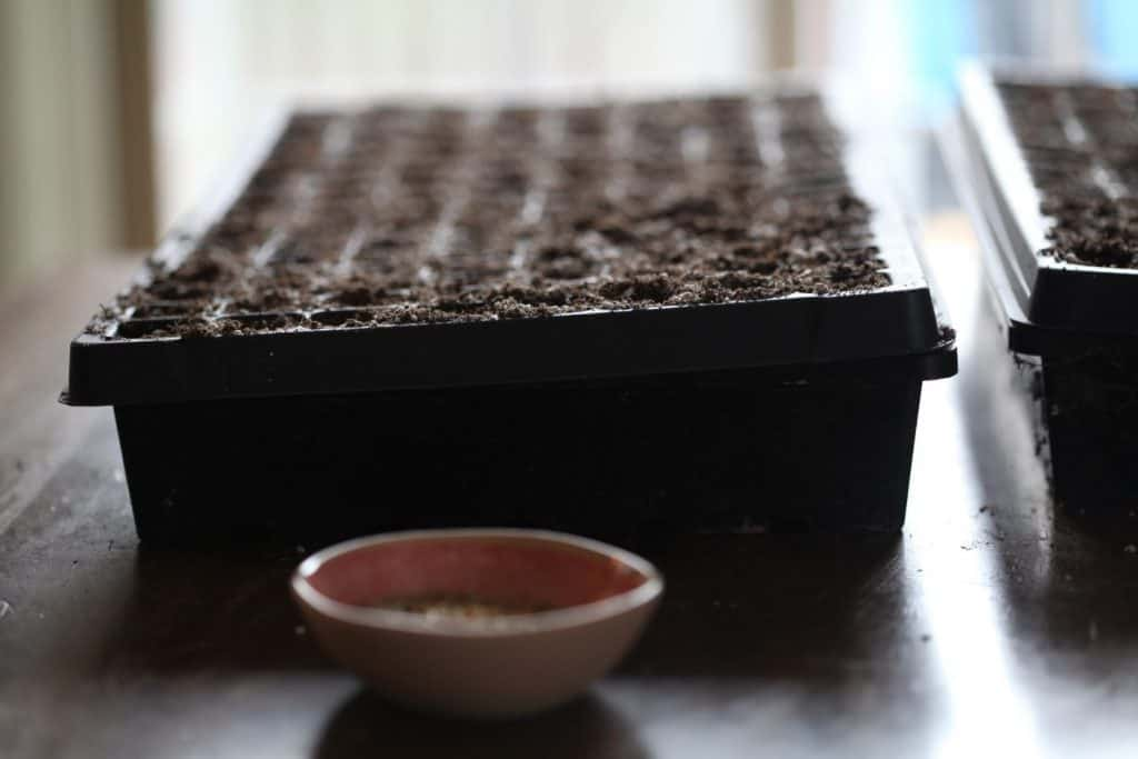 seed cell tray with soil and a pink bowl of vermiculite next to it
