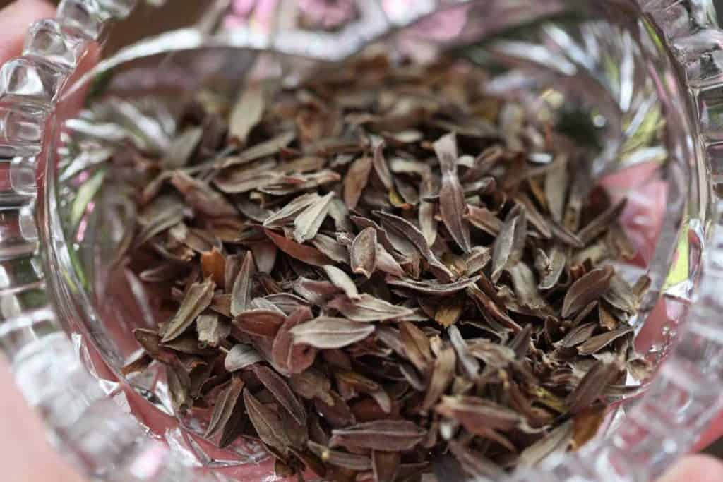 brown zinnia seeds in a clear glass bowl