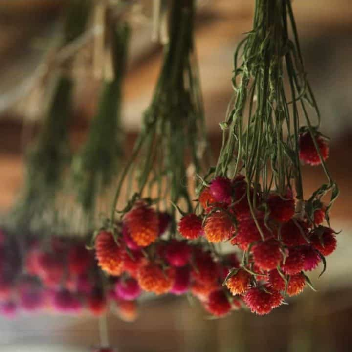 How To Dry Flowers Upside Down