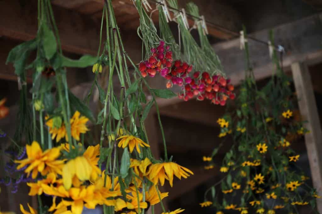 colourful flowers hanging upside down on a drying line