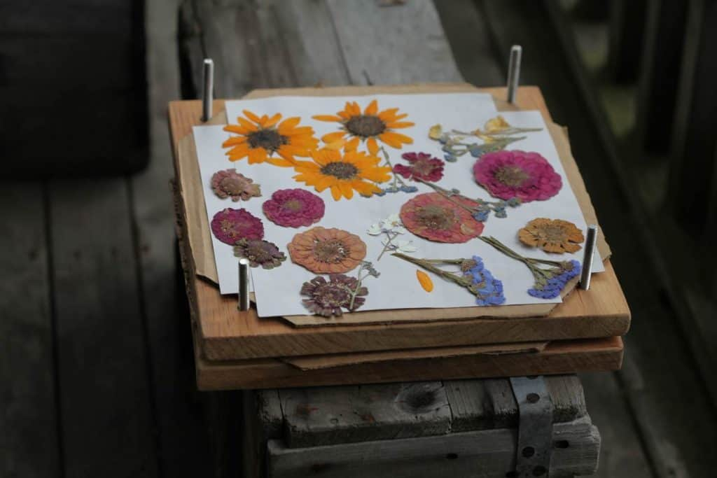 colourful pressed flowers on a press, on a grey wooden box