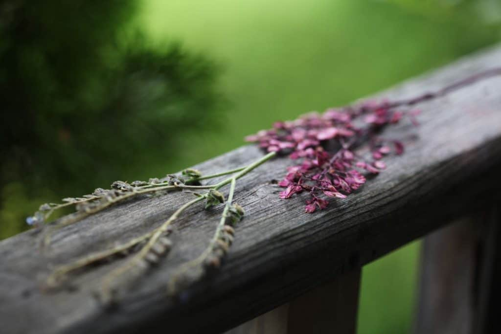 pressed flowers on a grey wooden railing