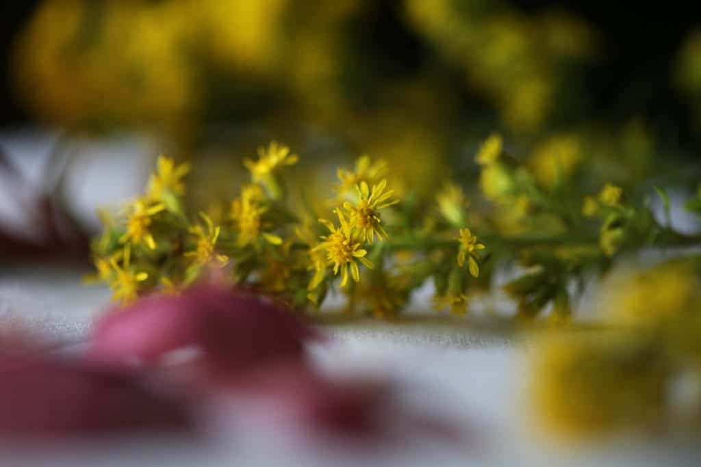yellow wild flowers waiting to be pressed