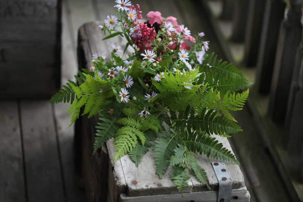 foraged flowers and leaves for pressing on a grey wooden box
