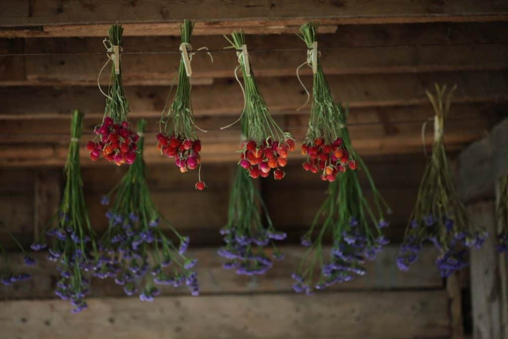flowers hanging to dry in a barn