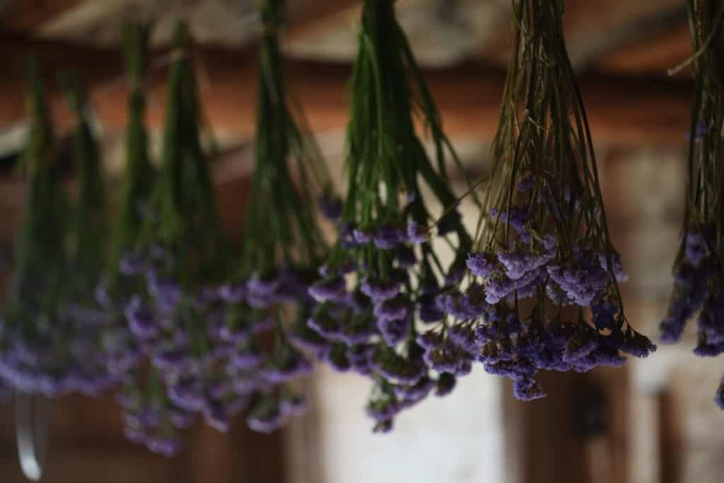 purple statice hung upside down to dry