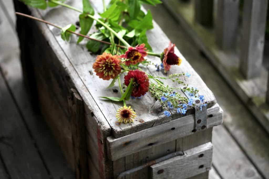 zinnias and forget me nots on a grey wooden crate