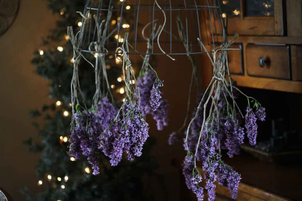 purple lavender hanging from a wire basket with fairy lights in the background