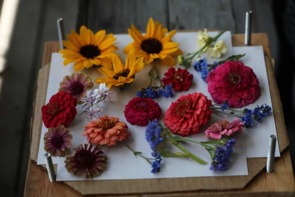 prepare the flowers for pressing
