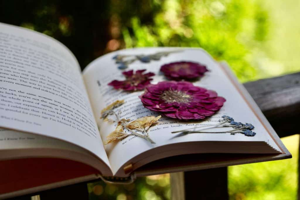 flowers pressed in a book