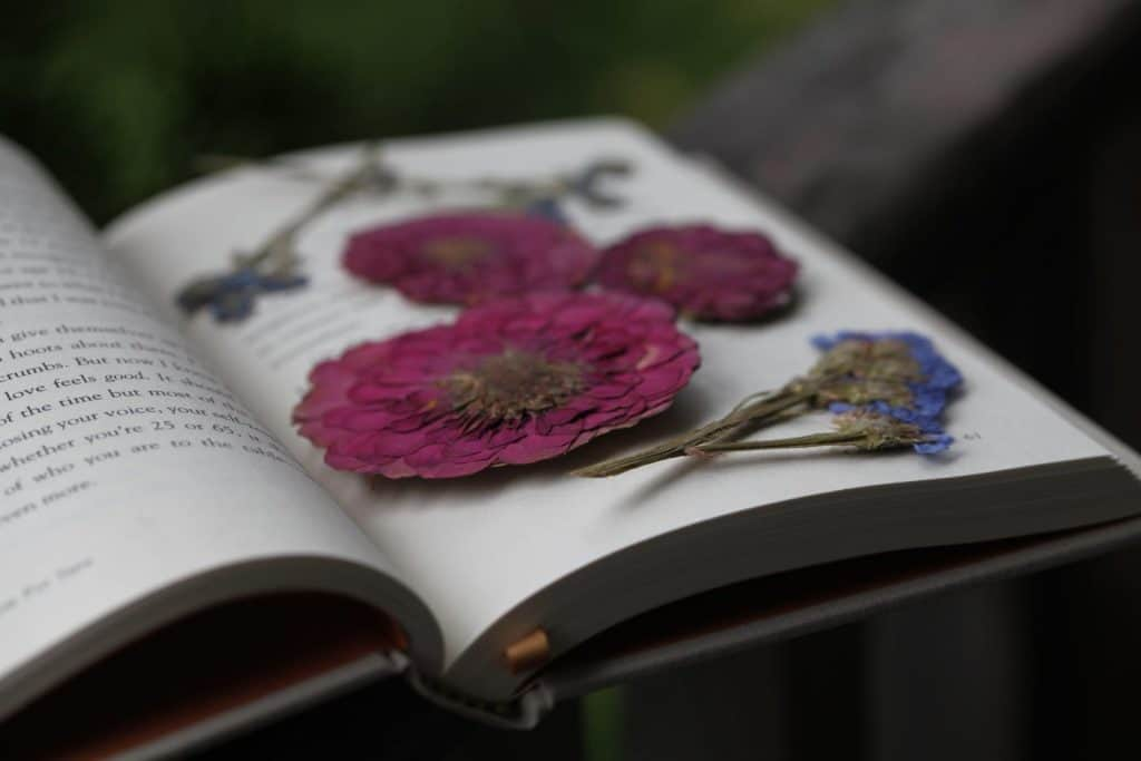 colourful pressed flowers inside a book