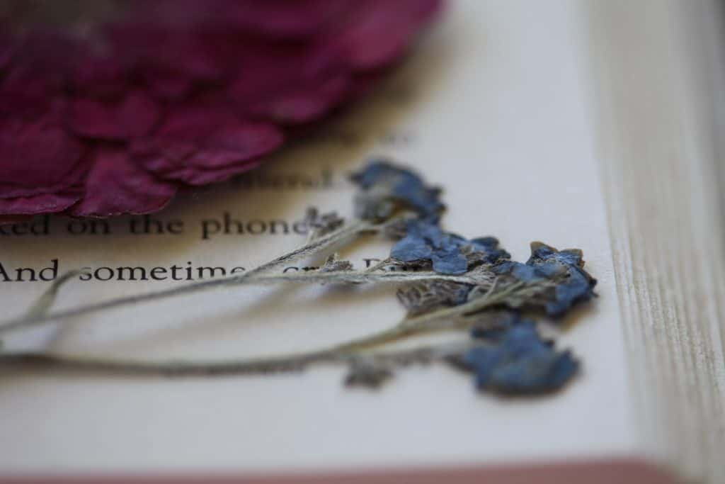pressed Chinese forget me nots in a book