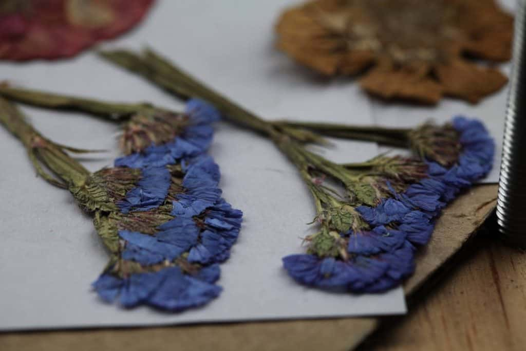 pressed flowers including  purple statice and  yellow and pink zinnias