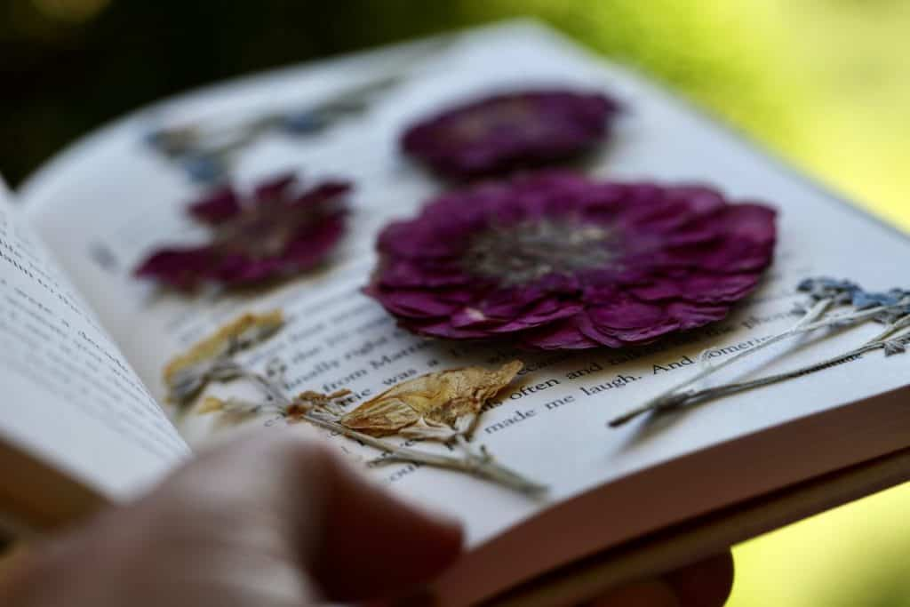 pressing flowers in a book