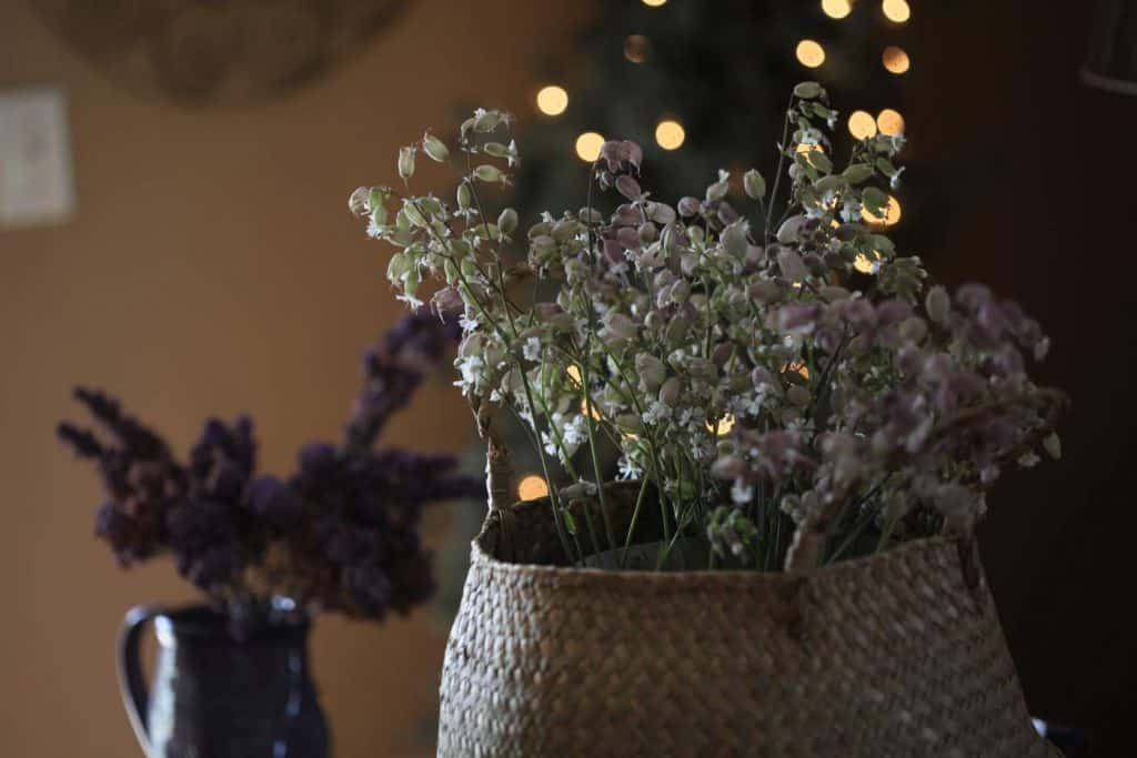 silene and lilacs each dried in a vase with twinkling fairy lights in the background