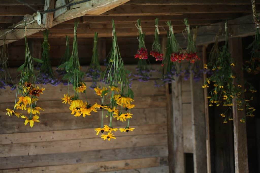 colourful flowers hanging upside down in a barn
